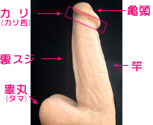 penis photo